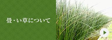 畳・い草について